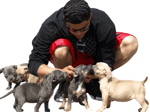 BLUE PITBULLS, PENNSYLVANIA, PA, BLUE PITBULL PUPPIES, FOR SALE