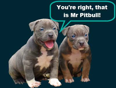 Healthy Pitbull Puppies with no Anxiety