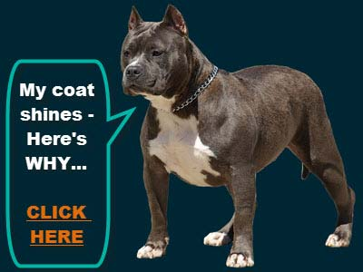 pitbull information and facts