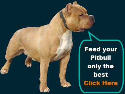 PITBULL SUPPLEMENTS AND FOOD